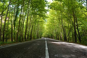 Gray roadway between green leafed trees