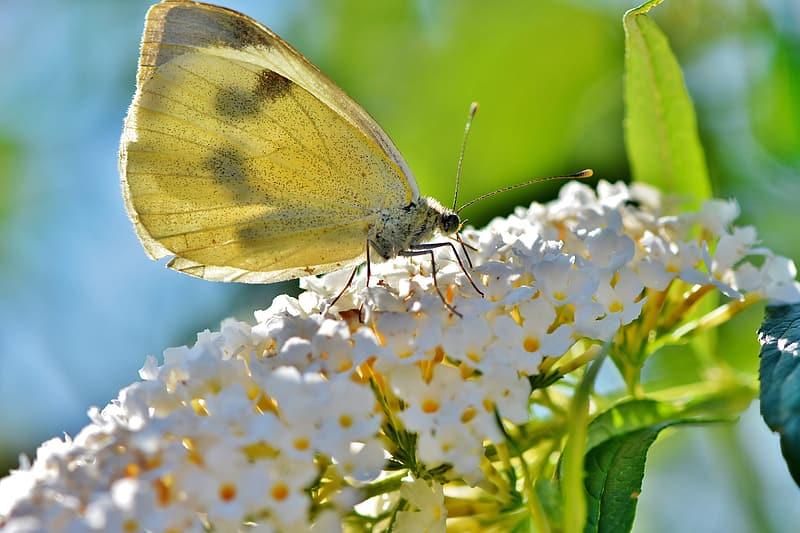 Green butterfly perched on white and blue flower in close up photography during daytime