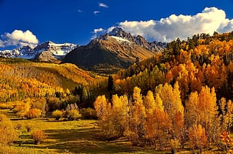 Yellow trees and mountains at daytime