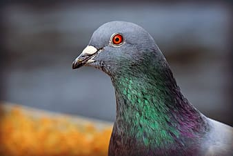 Green and brown bird with red eyes