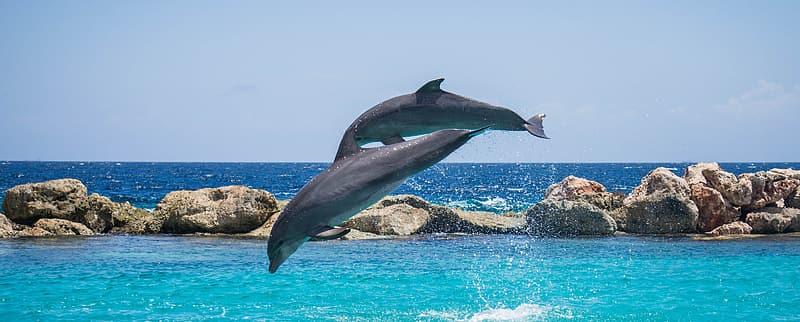 Photography of two dolphin jumping over body of water