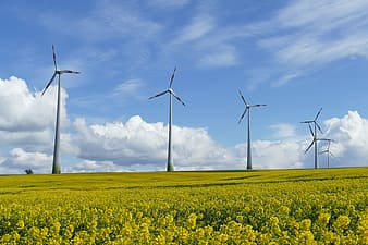 Panoramic photography of green field with wind turbines