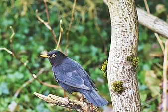Black bird on brown tree branch during daytime