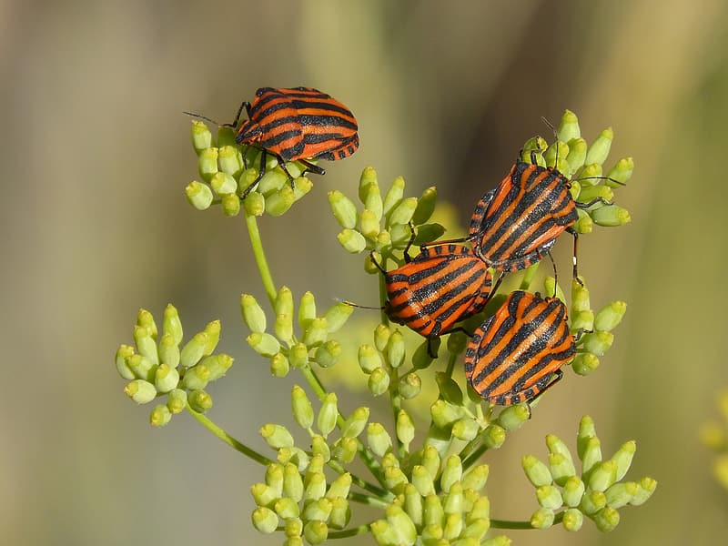 Four orange-and-black insects on green plants