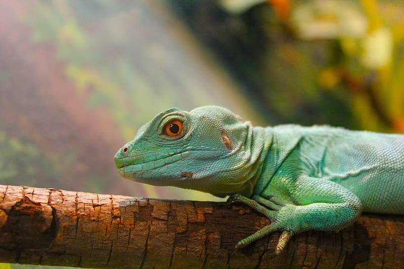 Green lizard on brown wood