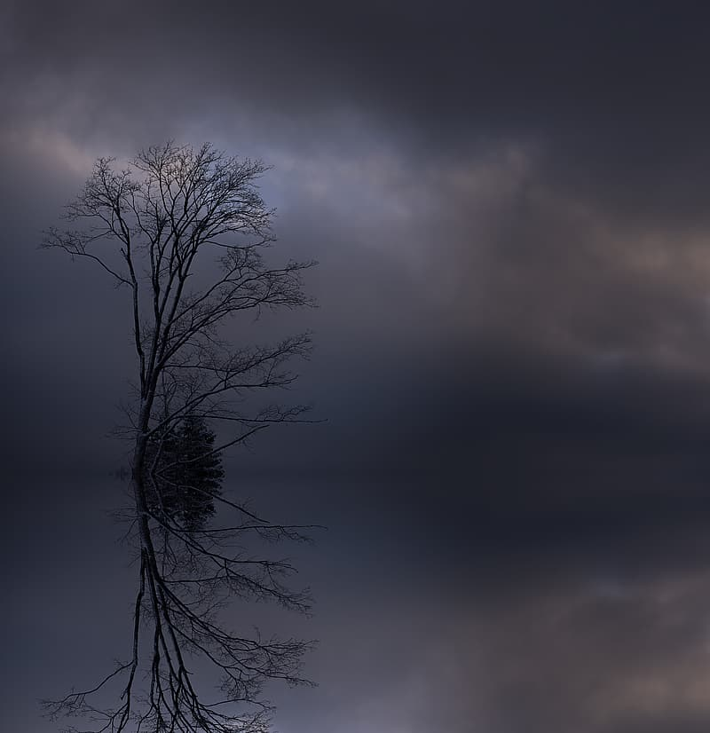 Bald tree under gray clouds
