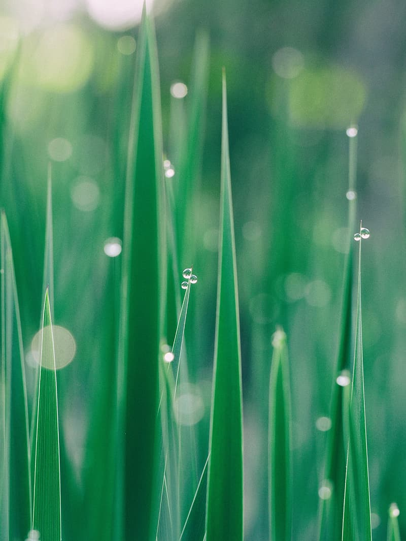 Shallow focus photography of grass with water droplets