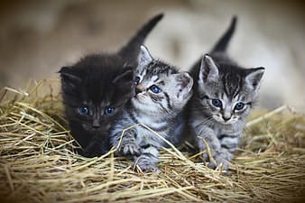 Selective focus photography of three kittens on nest