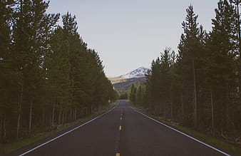 Landscape photography of road between tall trees