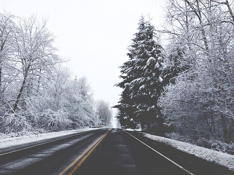 Empty road beside trees during winter
