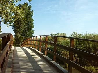 Architectural photography of wooden bridge