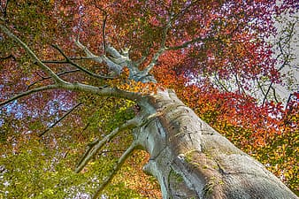 Brown tree with red leaves