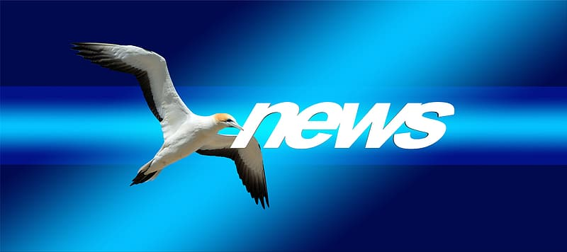 White and black bird with News text overlay