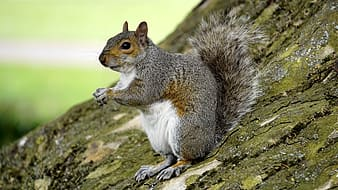 Squirrel on brown tree trunk