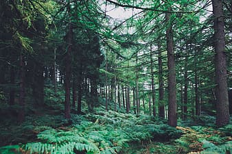 Green leaf trees in forest