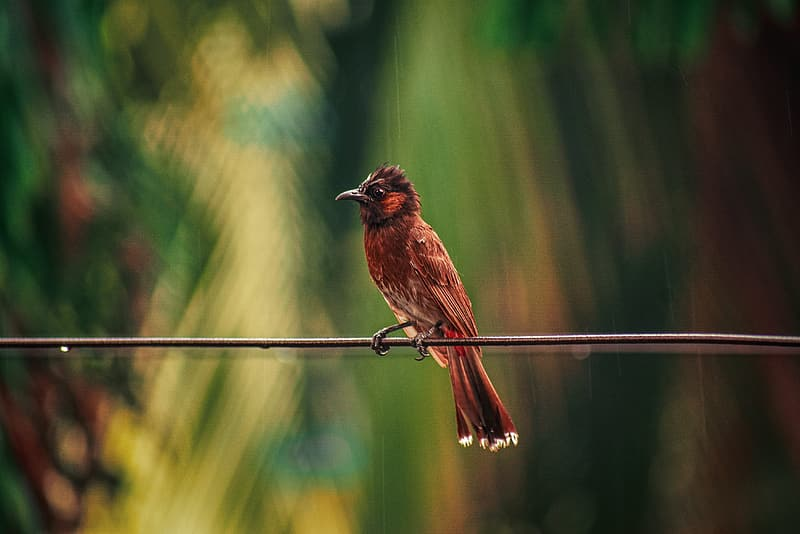 Brown bird on brown wooden stick during daytime