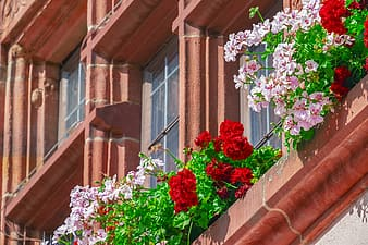 Red and white flowers on brown brick wall