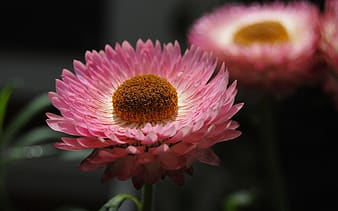 Shallow photography of pink flower