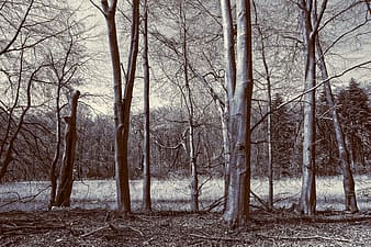 Grey and black trees
