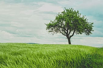 Green tree in the middle of green grass field