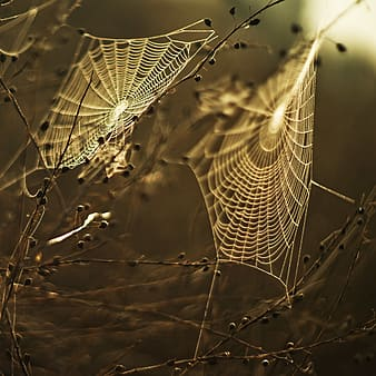 Two white spider webs on twigs closeup photography
