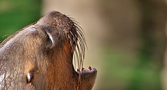 Closeup photo of brown animal's head