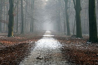 Landscape photography of  foggy woods