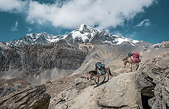 People hiking on rocky mountain during daytime