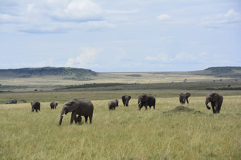Elephants on green grass during daytime