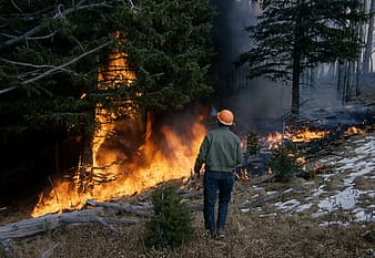 Man standing near forest fire during daytime
