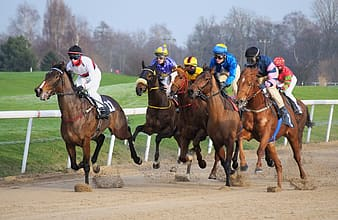 Group of men racing with horses during daytime