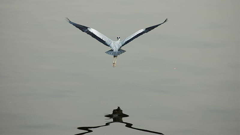 White and black bird flying over the body of water during daytime