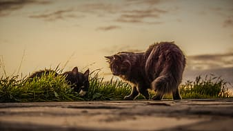 Selective focus photography of two cats on green grass field
