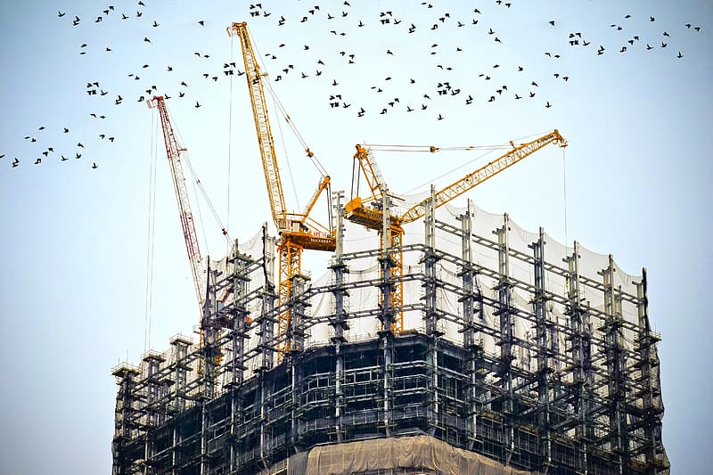 Gray scaffiolding with tower cranes and birds