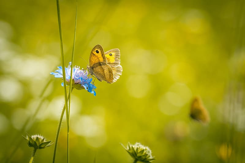Selective focus photo of yellow butterfly on blue broad petaled flower