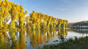 Yellow leaf trees near lake under blue sky during daytime