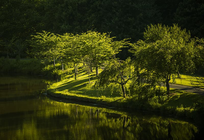 Photography forest beside body of water during daytime