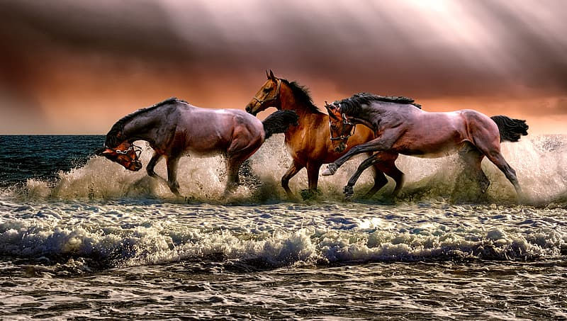 Photo of three galloping horses on body of water