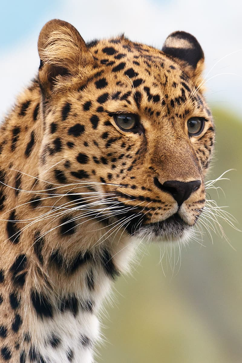 Leopard photography at daytime