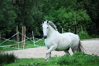 White horse in close-up photography