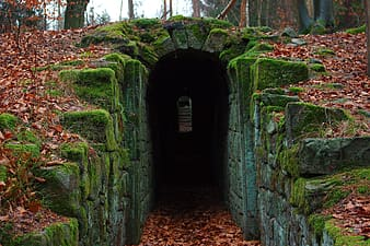 Tunnel covered in moss