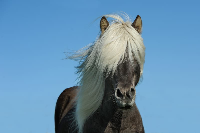 Brown horse with white hair