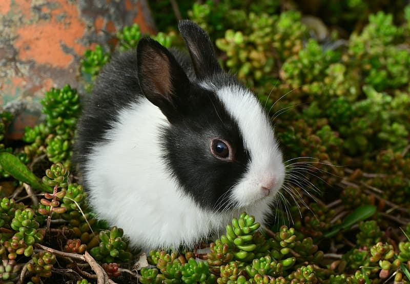 White and black rabbit on green plant