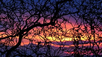 Silhouette of black torn tree during golden hour
