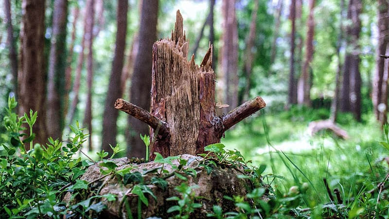 Brown tree trunk on green grass