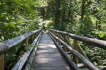 Brown wooden foot bridge near forest