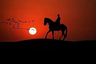 Silhouette of person on horse and birds during golden hour