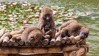 Brown monkey on brown wooden table during daytime