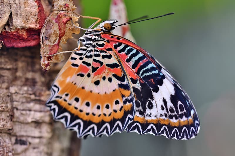 Orange white and black butterfly perched on pink flower