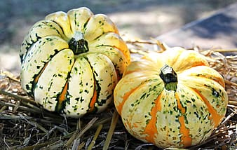 Two green-and-orange squashes
